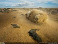 Sandstorm #seal #photo #nature @chadlittleart