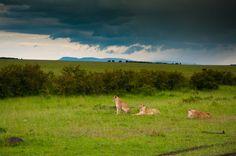Kitty Party Masai Mara