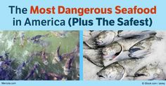 According to the latest report, Americans increased their seafood consumption by nearly 1 pound per person in 2015, to an average of 15.5 pounds per year.
