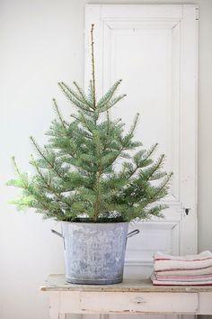 Tree   dreamy whites