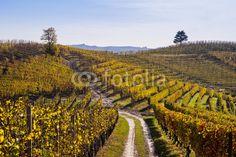 """Autumn in Langhe - vigne, vigneti, filari, panorama, colline, colori autunnali, giallo, sole, """"langhe"""", autunno, uva, grappolo, """"nebbiolo"""", """"barolo"""", vendemmia, foglia, vite, raccolto, cascina, borgo, """"unesco"""", campagna"""