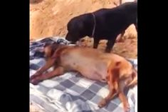 Dog Just Can't Say Goodbye To His Bestfriend. Hard to Watch, But So Powerful!