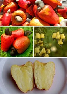 Cashew fruit pulp contains a caustic, toxic oil called cardol. The delicious cashews we know and love have been carefully cleaned, boiled and roasted to remove this toxin. Exotic Food, Exotic Fruit, Tropical Fruits, Apple Fruit, Fruit And Veg, Fruits And Vegetables, Growing Vegetables, Cashew Tree, Cashew Apple