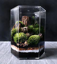 Bonsai Terrarium For Landscaping Miniature Inside The Jars 17