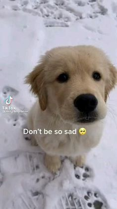 Super Cute Puppies, Cute Baby Dogs, Cute Funny Dogs, Super Cute Animals, Funny Cats And Dogs, Cute Funny Animals, Cute Baby Animals, Funny Talking Dog Videos, Funny Animal Videos