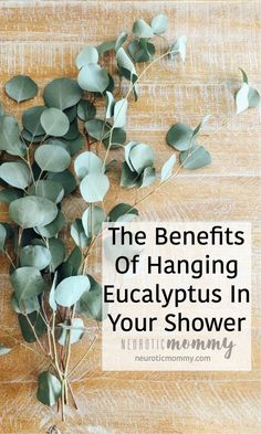 Hanging Eucalyptus in your Shower looks so pretty, spa like even, but not only that, Bathroom Plants, Bathroom Spa, Master Bathroom, Bathroom Ideas, Begonia, Eucalyptus Shower, Eucalyptus Bouquet, Eucalyptus Plant Indoor, Eucalyptus Centerpiece