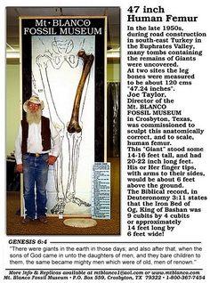 Giant human bones.