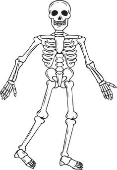 skeletal system diagram without labels printable human skeleton Blank Skull to Label more information