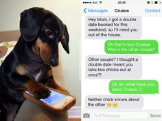Double Doggy Date Night – Crusoe the Celebrity Dachshund