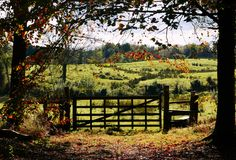 A view from Rowallane, a National Trust property near Saintfield, Co Down. National Trust, Northern Ireland, Windows And Doors, My World, Gates, Vineyard, Autumn, Heart, Outdoor