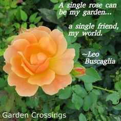 Garden Sayings