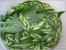 Wild Garlic, Aga, Permaculture, Paradis, Pesto, Vinaigrette, Parsley, Entrees, Spinach