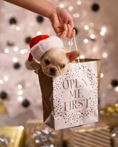All I want for Christmas is a Frenchie!
