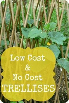 Low Cost & No Cost Trellis Ideas | The 104 Homestead