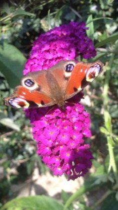 @truss_abbie - @NHM_London #SensationalButterflies