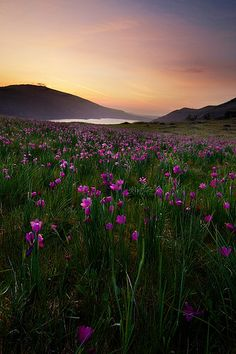 In a Field of Wildflowers, Columbia River Gorge National Scenic Area.  Photo: Nathaniel Reinhart, via Flickr