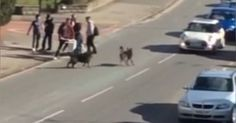 THE OWNERS SHOULD BE HELD ACCOUNTABLE - WHY ARE THE DOGS PUNISHED This is horrific BE RESPONSIBLE PET OWNERS pet suffered puncture wounds during the vicious attack
