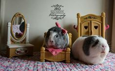 Digital Download: Pudge & Piper The Guinea Pig Couple - PiggyPhotography