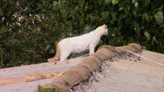 Cat on Roda Roof by Roy-Szweda.deviantart.com on @DeviantArt