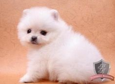 @Casie Hansel--I might even take this fuzzy ball home!!!!