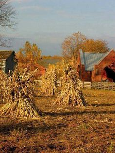 corn stalks on the farm Country Farm, Country Life, Country Living, Country Roads, Amish Country, Autumn Scenes, Down On The Farm, Seasons Of The Year, Autumn Day