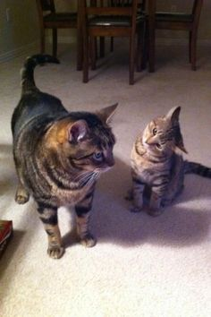 Parent and child cats