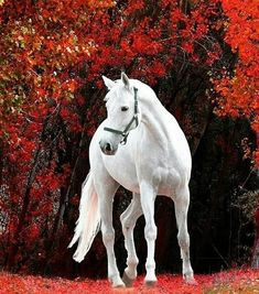 These horses are beautiful Majestic creatures beautiful all white horse All The Pretty Horses, Beautiful Horses, Animals Beautiful, Beautiful Clothes, Cute Horses, Horse Love, Horse Photos, Horse Pictures, Animals And Pets