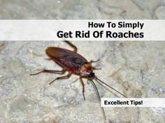 One of the major issues faced by people while living in homes or apartments is to live along with a huge mass of cockroaches. Once a cockroach makes your house his place of living, it gets extremely difficult to get rid of them.