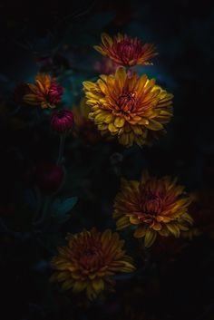 Photograph Starting To Fall by Paul Barson on 500px