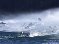 This pod of bottlenose dolphins was leisurely surfing in the waves as the offshore wind blew against the incoming waves, creating an atmosphere that was most unique and magical. At a place called Waterfall Bluff in the Transkei, South Africa. By Andrew Wong