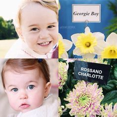 """Princess Charlotte and Prince George have a special flower named after them. """"Georgie boy"""" daffodil in honour of Prince George of Cambridge & """"Rossano Charlotte"""" chrysanthemum in honour of Princess Charlotte of Cambridge Prince George Alexander Louis, Prince William And Catherine, William Kate, Baby Prince, Prince And Princess, Princess Kate, Princesa Charlotte, Duchess Kate, Duchess Of Cambridge"""
