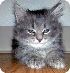Cutest little kitten found in a pile of straw