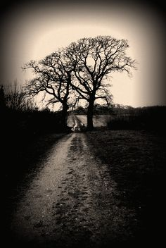 Abandoned Trees