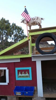 I added a new roof top playground for my goats