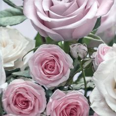 ALL THE DELICATE ROSES INCL. THE STERLING ROSE