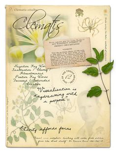 Clematis Bach Flower Poster