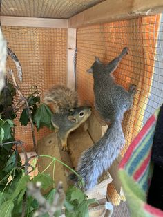 Frank and Stuart first day in the big house Hummingbird Mix, Baby Squirrel, Animal House, Squirrels, Outdoor Projects, Love Birds, Cute Animals, Owl, Homes
