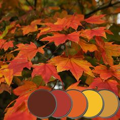 Fall Foliage color Paint Palette, great color scheme for a mountain home