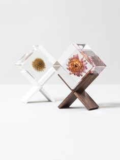 Sola cube and stand from Rikumo. Globe Amaranth, Easy Halloween Crafts, Bunny Tail, Diy Resin Crafts, Beautiful Flower Arrangements, How To Preserve Flowers, Stand Design, Resin Art, Dried Flowers