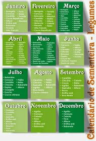 agricultura, plantar, transplantar, tomates, cebolas, alface, chuchu, árvores de fruto, kiwi, videiras, tratamentos, piolho, mosca, branca.