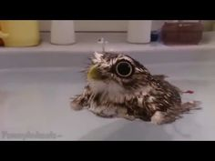 Funny animals-23 - YouTube