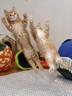 174 Perfectly Timed Photos - Funny Pictures For Today ( – Funnyfoto - Page 68 Funny Cat Memes, Funny Cat Videos, Funny Cat Pictures, Funny Photos, Funny Cats, Funny Animals, Cool Photos, Cute Animals, Bizarre Pictures