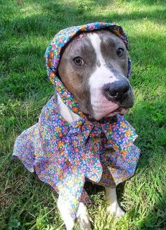 Diamond the pit bull was rescued into a loving home and a killer wardrobe.