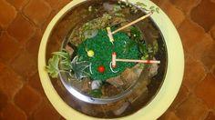Croquet terrarium