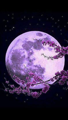 Under The Cherry Moon Prince