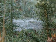 Spider web sparkling with dew on a frosty morning. Cornwall