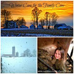 Winter Care for the Family Cow http://www.northcountryfarmer.com/?p=686
