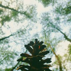 Wild and nature Plant Leaves, Nature, Plants, Naturaleza, Plant, Nature Illustration, Off Grid, Planets, Natural