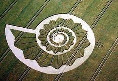crop circles nautilus