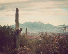 Southwest photography nature photograph desert by JourneysEye, $28.00